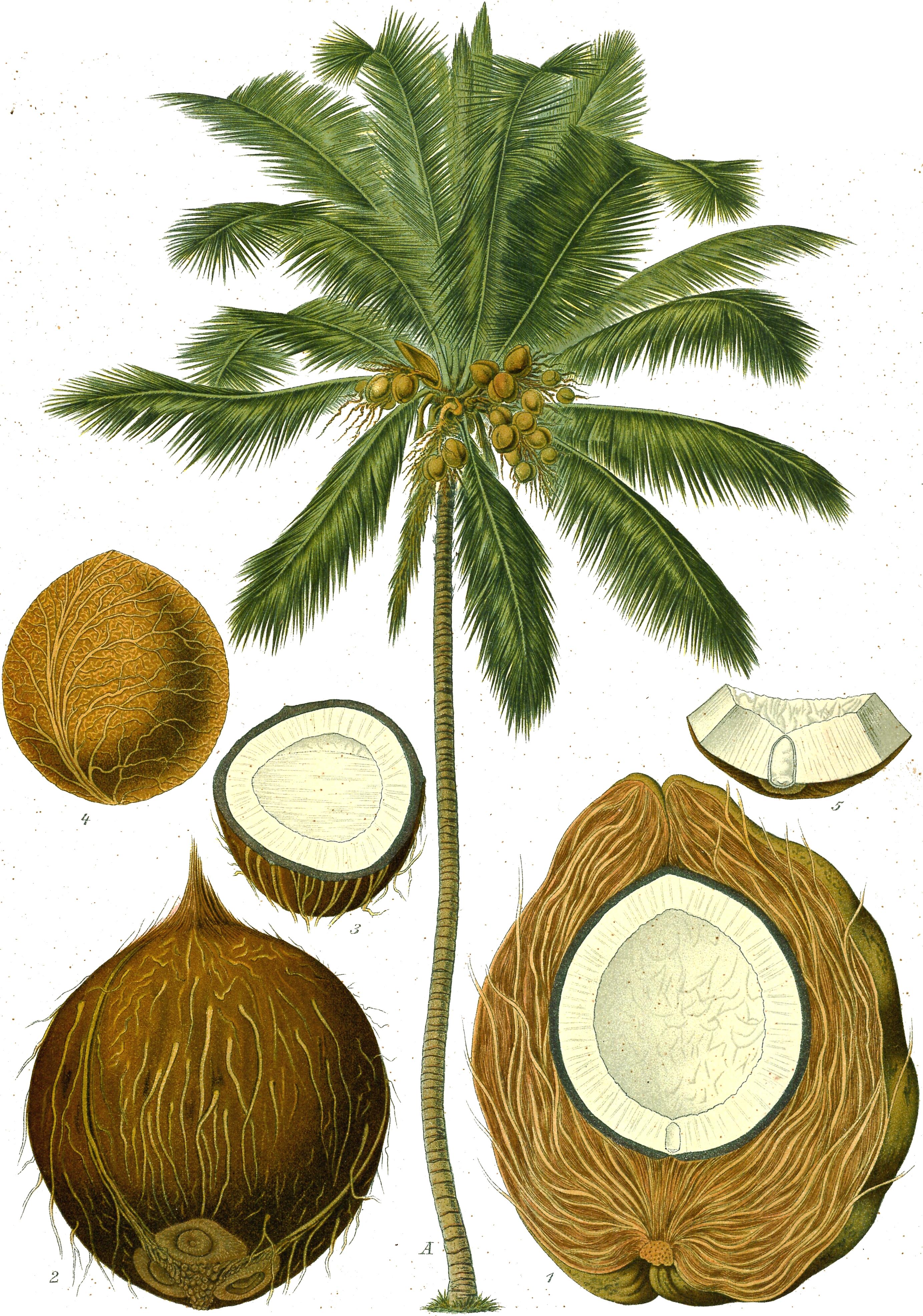 beurre de coco coconut butter