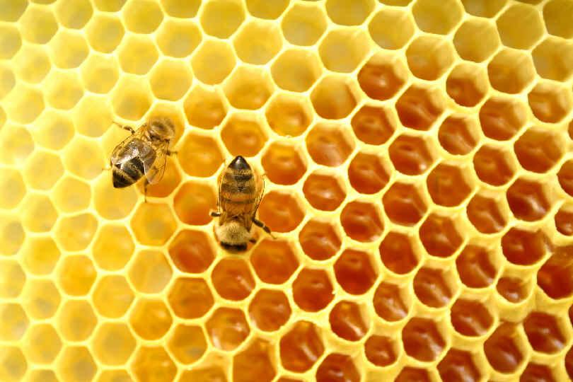 cire d'abeille beewax