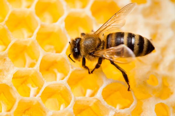 Beurres gels cire d 39 abeille zayat aroma for Cire d abeille meuble