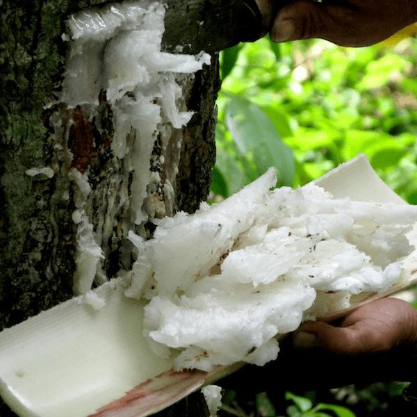 Elemi Essential Oil  - Huile Essentielle d'Elemi 100% Pure & Natural - Canarium luzonicum