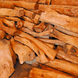 Santal Amyris, sandalwood amyris