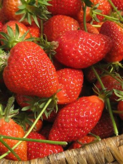 fraise Strawberry