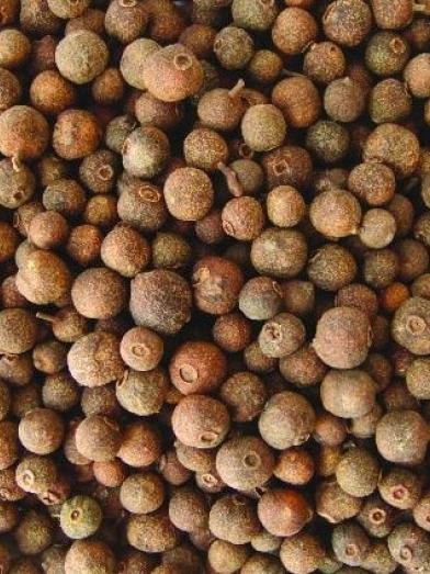 Bay graines, bay seeds