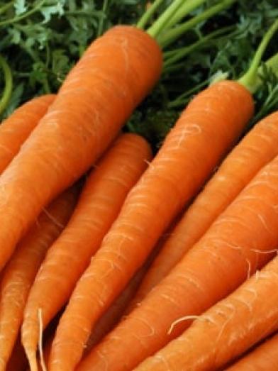 Carotte carrot