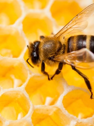 Cire abeille