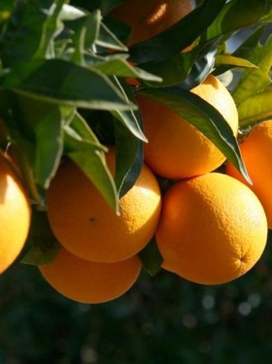 orange douce, sweet orange